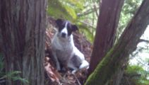 Loyal dog stays beside owner after he dies while hiking