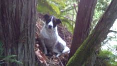 Loyal dog stays behind owner after he dies while hiking