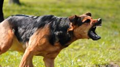 Calls for action after serious dog attack injuries soar