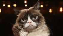Internet sensation Grumpy Cat passes away, aged 7