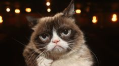 Paul Stenhouse: Internet sensation Grumpy Cat passes away