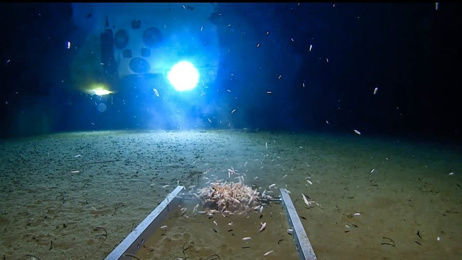 Record-breaking deep sea dive discovers plastic bag in Mariana Trench