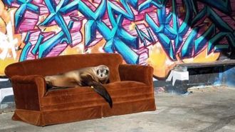 Seal of approval: Surprise visitor chills out with locals in Oamaru