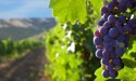 New documentary explores NZ's wine industry