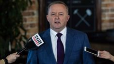 Labor choose Anthony Albanese to lead party after election defeat