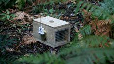 David MacLeod: Taranaki's pest-killing plans raises hopes of predator free-NZ