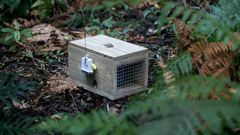 One of a range of smart traps now being used on Mt Taranaki as part of a new drive to eradicate pests. (Photo / Alan Gibson)