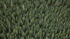 Andrew Dickens: Government policies around forestry are screwing rural areas
