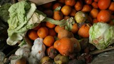 Michal Garvey: Foodprint app hopes to reduce New Zealand's massive food wastage