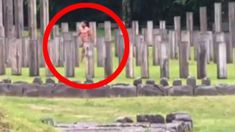 Police called over Kiwi star Manu Bennett's naked haka