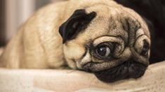 Michelle Dickinson: Dogs may feel their owners stress