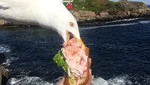 Photo of seagull photobombing woman, stealing lobster roll goes viral