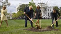 Tree which symbolised Trump and Macron's friendship has died