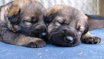 Less dogs, more crime: NZ Police given a social media audit