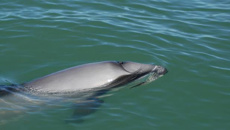 Government announces new plan to save endangered dolphins