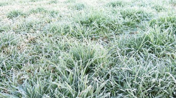 Frosts have blanketed New Zealand this morning as temperatures dipped below zero in many parts of the country. (Photo / Peter de Graaf)