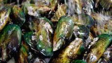Mussels warning after food poisoning jump
