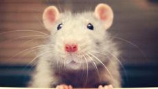 Tara Jackson: Universities still performing 'swim test' on rats, mice