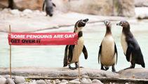 London Zoo's cutest penguins celebrate gay pride