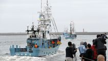 Japan resumes commercial whaling after 31 years