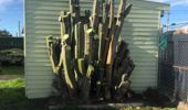 Jonny Small's cactus could be used for illicit purposes, but he wants it to go to a good home. (Photo / Facebook)