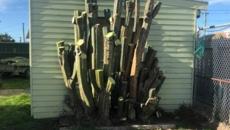 Jonny Small: Man selling rare cactus denies he is a drug dealer