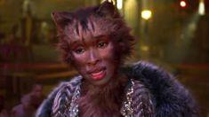 Steve Newall: Cats trailer shocks the internet