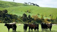 No concern for farmers despite above-average temperatures