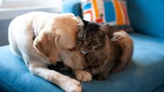 Lance Norman: Studies show pets twice as likely to get cancer if exposed to tobacco smoke