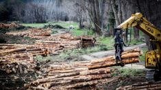 Fiona Ewing: Forestry industry claims highest rate of work-related injuries