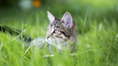 Michelle Dickinson: New study reveals why cats really eat grass