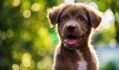 The Dog Box (Photo: NZ Herald)