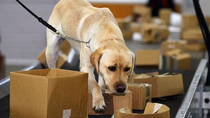 Biosecurity dog Shyann at Auckland International Airport. Photo / Getty Images