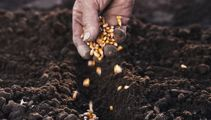 Ruud Kleinpaste: Everything you need to know on sowing seeds