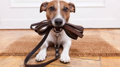 The study finds that people who own pets are more physically active then does who don;t. (Photo / Getty)