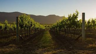 Megan Singleton: Holidaying in the Hunter Valley