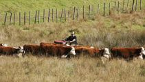 Changing attitudes and government regulations hurting farmers