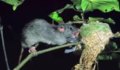 The Predator Free 2050 initiative aspired to rid New Zealand's 26 million ha of mainland of stoats, rats and possums by the middle of the century. Photo / File
