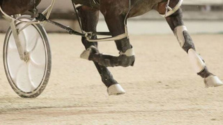 Young horse rider weighs in on welfare perception
