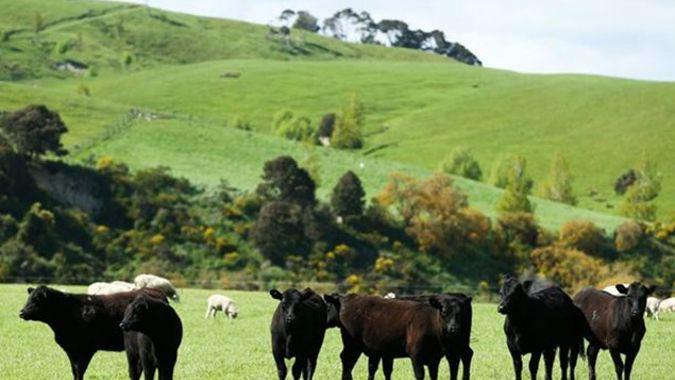 Economist slams 'ridiculous' report on farming's contribution to economy