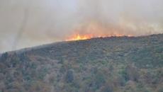 Fire in Dunedin hills 'suspicious': FENZ