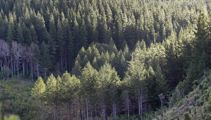 Forestry industry says work visa programme doesn't help address issues