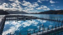 Government announces strategy for aquaculture industry