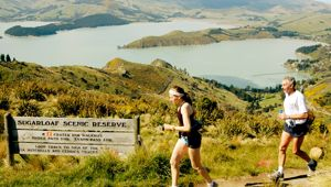 Banks Peninsula  Crater Rim Ultra Trail Race