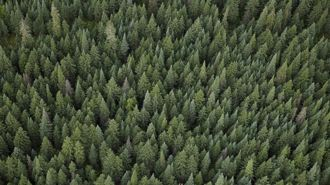 Mike Hosking: What exactly is happening with forestry?