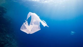 Grim reading for NZ's marine environment in new report
