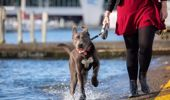 Michelle Dickinson: Dog ownership linked to longer life