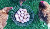 Mike van de Elzen: Eggs and garlic aioli