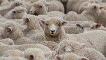 Sheep placenta cream retailers welcome Thai PM's endorsement