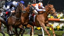 Melbourne Cup overshadowed by claims of alleged interference